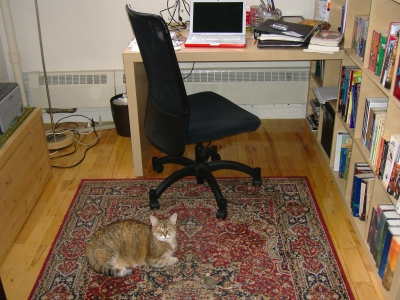 a photo of my office, with cat