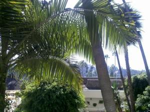 the view from my hotel: palm trees, bright warm sunlight, mountains