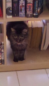 Cat in a bookcase.
