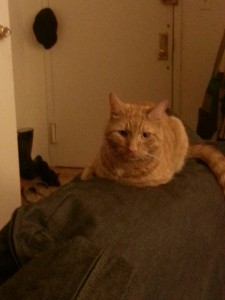 Orange tabby cat sitting on a couch.